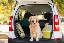 ¿Viajas con animales en el coche?